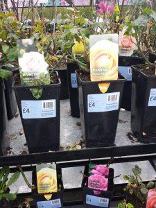 B&Q Flowering Plants