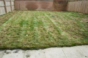 Lawn repair, first cut