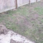 Lawn Restoration // Moss removal / heavy raking